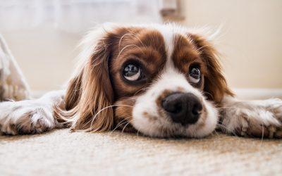 Pet Grooming Waiting List