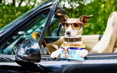 Pet Grooming Licensing Advocated in New Jersey