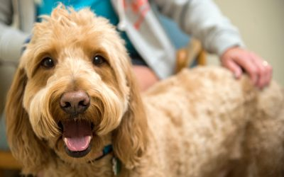 Pet Groomers and Preventative Health Care