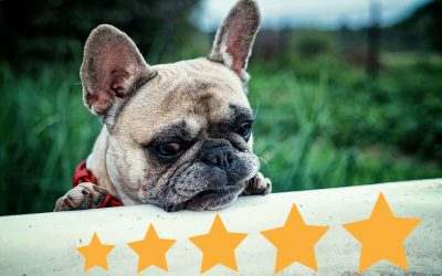 How important are online reviews for a pet grooming business?