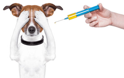 How Over-Vaccination is Viewed by the Pet Care Industry